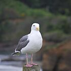 seagull on post by LucilleJane