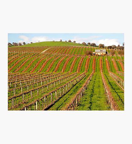 Australian Vineyard Landscape Photographic Print