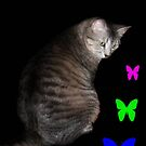 Cat and Butterflies ©  by Dawn Becker