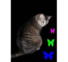Cat and Butterflies ©  Photographic Print