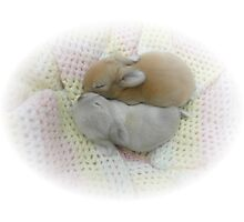 Snuggle Bunnies Photographic Print