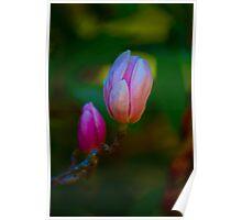PINK FLOWER BUD Poster