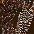 Web of Life  by Kate Sax
