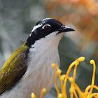 Australian Birds by triciaoshea