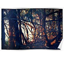 sun setting through  trees, Plantation Point, south coast NSW Poster