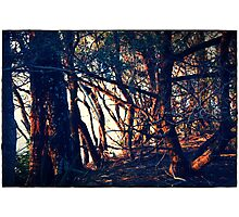 sun setting through  trees, Plantation Point, south coast NSW Photographic Print