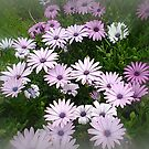 Nature's bouquet of Daisies by EdsMum