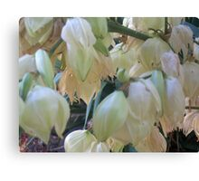 Still Blooming White Blossoms Canvas Print