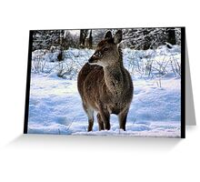 sika  deer in the snow Greeting Card