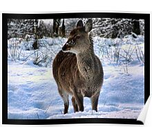 sika  deer in the snow Poster