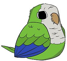 Quaker Parrot (green) by parrotproducts