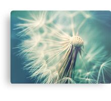 Not sure when you stop thinking dandelions are beautiful... Metal Print