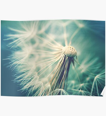 Not sure when you stop thinking dandelions are beautiful... Poster