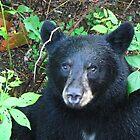 Close Encounters... Adios my Big Visitor of a Bear!   by maxy