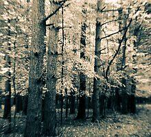 Along The Way Of Pine Trees by Mitch Labuda