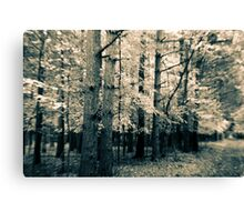 Along The Way Of Pine Trees Canvas Print