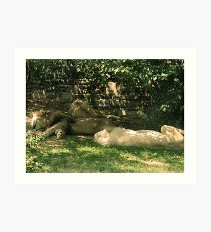 Sleeping Lions Art Print