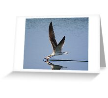 Skimmer Greeting Card