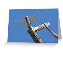 Dragonfly & Seek Greeting Card
