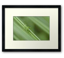 insect in french marsh Framed Print