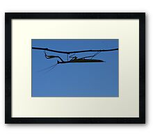 Praying Mantis and the sky in background- mante religieuse Framed Print