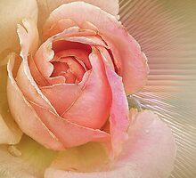 Pink Rose by Savannah Gibbs