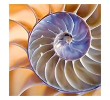 Chambered nautilus (matted square) by Celeste Mookherjee