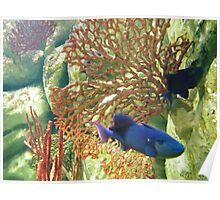 Aquarium - Coral and Blue Fish - Photo Poster