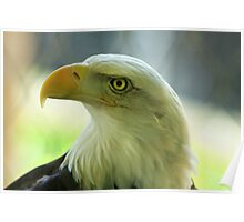 Eagle Majesty Poster