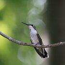 Ruby-Throated Hummingbird  by Dave & Trena Puckett