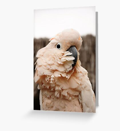 The bird is the word... Greeting Card