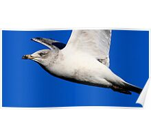 The Great Black Backed Gull Poster