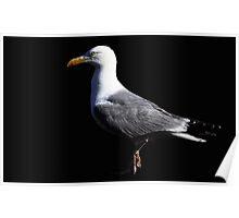 The Lesser Black Backed Gull Poster