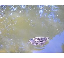 Reflections & Duck. Photographic Print