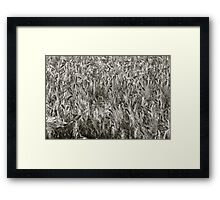 Delicious silver dream - landscape. Trondelag Norway. by Brown Sugar . Framed Print