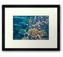 Aquarium. Xcaret Eco Park. Mexico Framed Print