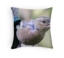 ay up, what's that?! Curious Chaffinch Throw Pillow