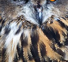 Eagle Owl by Chris Day