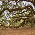 The Angel Oak by Kent Burton