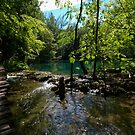 Plitvice Lakes, Croatia by Greg Webb