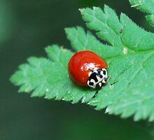 ladybug by LucilleJane