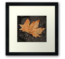 leaf study Framed Print
