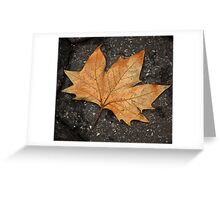 leaf study Greeting Card