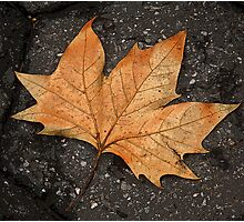 leaf study Photographic Print