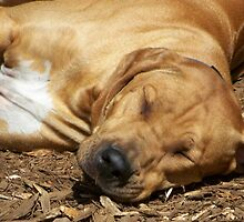 sleeping dogs lie by LucilleJane