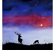 Stag In Moonlight Photographic Print