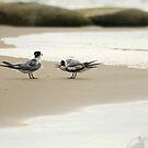The screaming birds. by Angela Millear