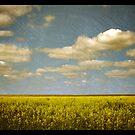 canola fields by vampvamp