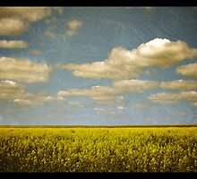 canola fields by vampvamp