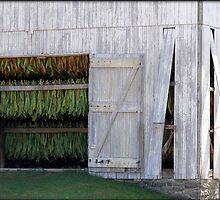 Drying Tobacco by Gayle Dolinger